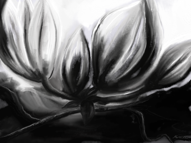 Schwarz weiß, Blüte, Magnolien, Digitale kunst