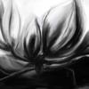 Magnolien, Schwarz weiß, Blüte, Digitale kunst