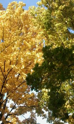 Digitale kunst, Herbst