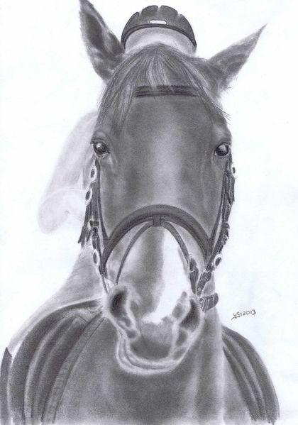 Tierportrait, Zeichnung, Lotta1, Tiere, Pferde, Portraitzeichnung