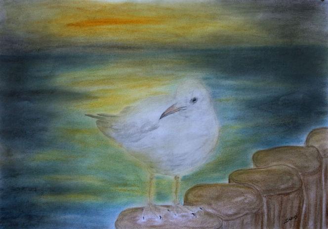 Vogel, Zeichnung, Möwe, Strand, Pastellmalerei, Blick