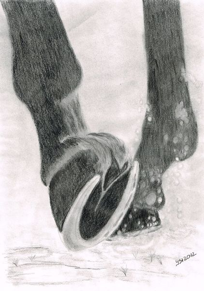 Grafit, In bewegung, Pferdezeichnung, Huf, Zeichnungen