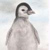 Pastellmalerei, Pinguin, Tiere, Zeichnung