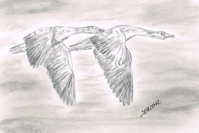 Szene, Tiere, In bewegung, Tierzeichnung, Vogel, Zeichnungen