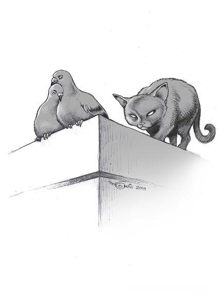 Zeichnung, Katze, Taube, Zeichnungen