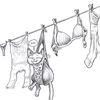 Wäsche, Wäscheleine, Katze, Schlaf
