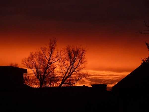 Architektur, Morgen, Rot, Baum, Fotografie, Landschaft