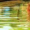 Verzerrung, Farben, Wasser, Bootssteg