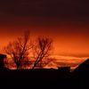 Morgen, Rot, Baum, Architektur