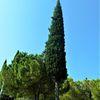 Landschaft, Italien, Baum, Zypressen