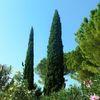 Gardasee, Sommer, Baum, Zypressen
