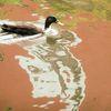 Valznerweiher, Enten, Wasser, Spiegelung