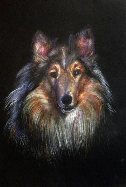 Hund, Collie, Animals