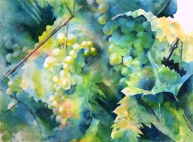 Wein, Weintrauben, Trauben, Aquarellmalerei, Rebe, Aquarell