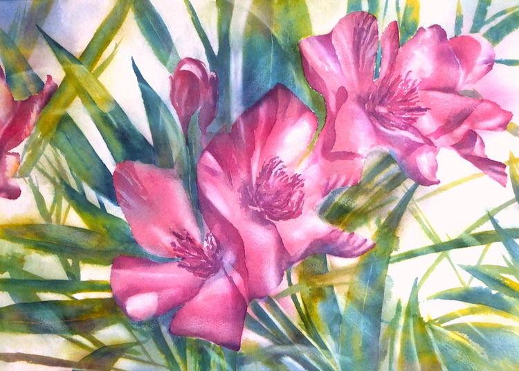 Oleander, Aquarellmalerei, Blumen, Garten, Italien, Aquarell