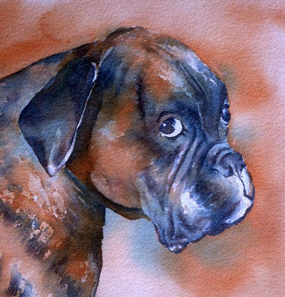 Hundeportrait, Hundeaugen, Aquarellmalerei, Hund, Aquarell,
