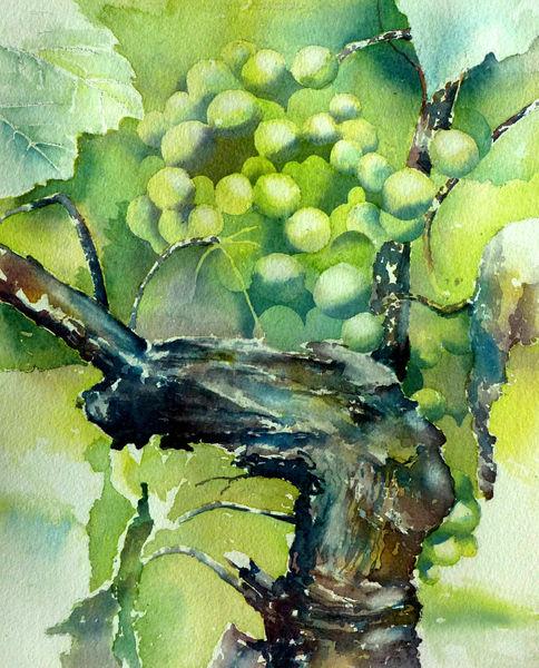 Weinstock, Rebe, Wein, Weintrauben, Aquarell,