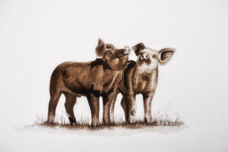 Zeichnung, Schwein, Ferkel, Tusche, Zeichnungen