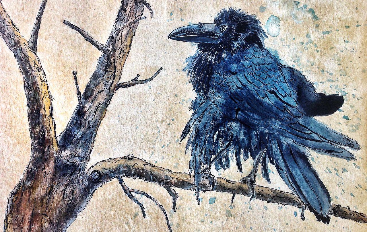 rabe  vogel aquarellmalerei rabe tusche von
