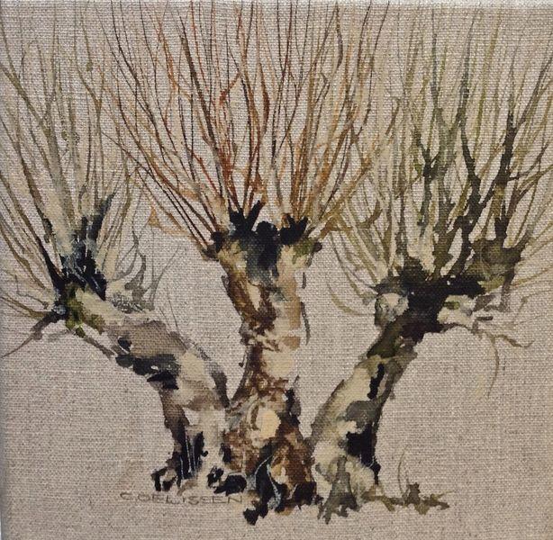 Kopfweide, Baum, Weiden, Aquarell