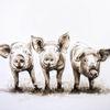 Schwein, Ferkel, Tusche, Zeichnung