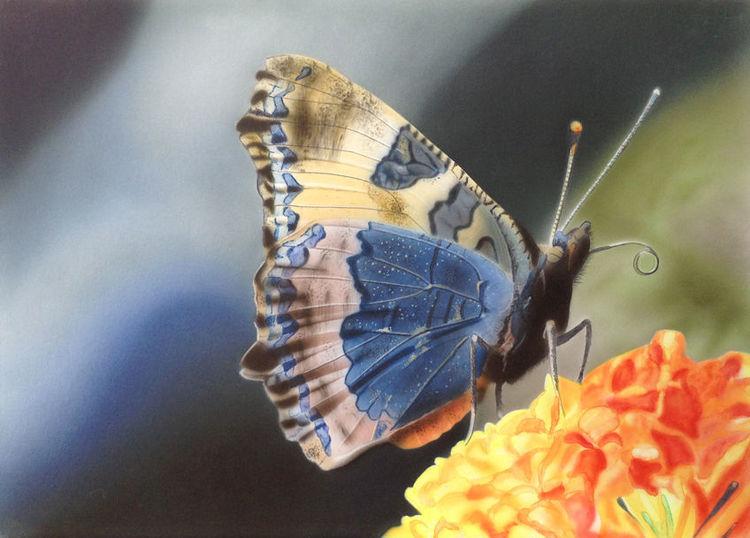 Tiere, Schmetterling, Natur, Airbrush, Malerei