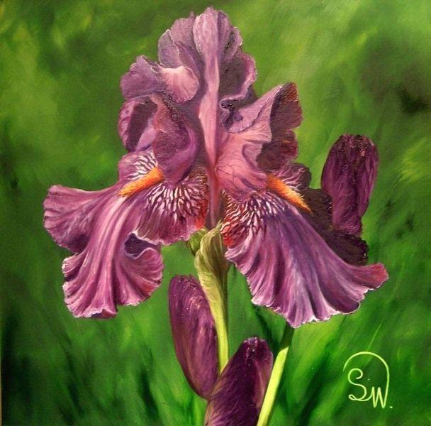 Iris barbata, Irisblüte iris, Blumen, Pflanzen, Sommer, Schwertlilie