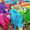 Bauernhof, Wolle, Schaf, Mundschutz bunt
