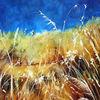 Natur, Trockenes gras, Gras, Blauer himmel