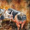 Glückliche schweine, Schwein, Bentheimer landschweine, Schweinerei