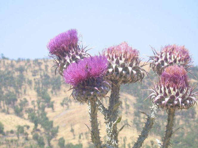 Himmel, Distel lila pflanze, Gelb grün, Fotografie, Reiseimpressionen
