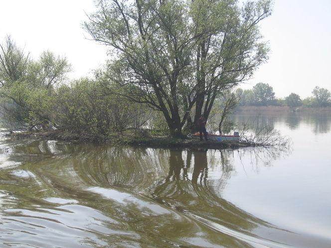 Baum, Grün, Angler, Rot schwarz, Frühling, Fluss