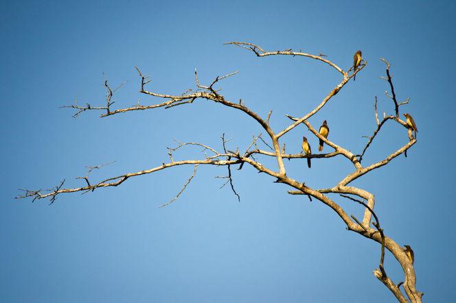 Sonnenschein, Afrika, Vogel, Safari, Baum, Schwarm