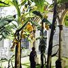 Convento, Aquarellmalerei, Natur, Mexiko