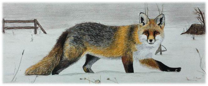 Winter, Wild, Fuchs, Malerei