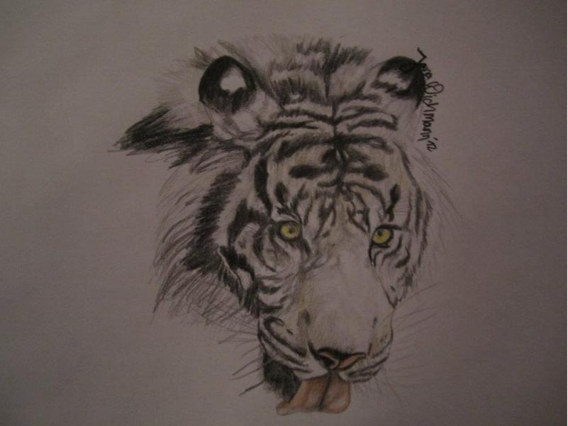 bild zeichnung tiger zeichnungen tiere von jana w bei kunstnet. Black Bedroom Furniture Sets. Home Design Ideas