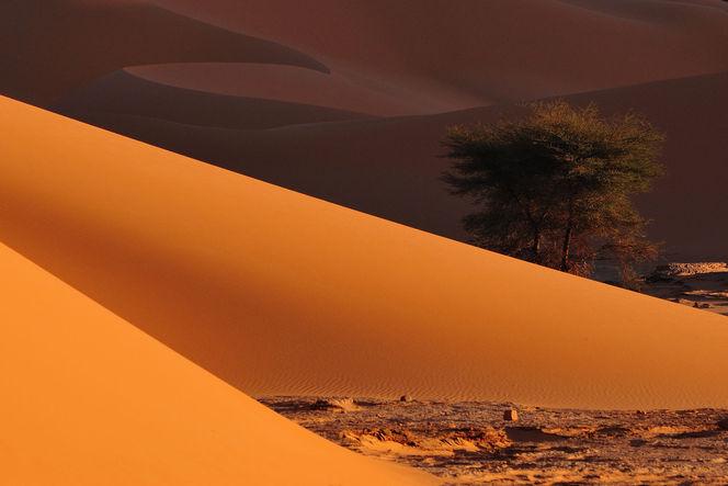 Sand, Dünen, Wüste, Struktur, Sahara, Monochrom