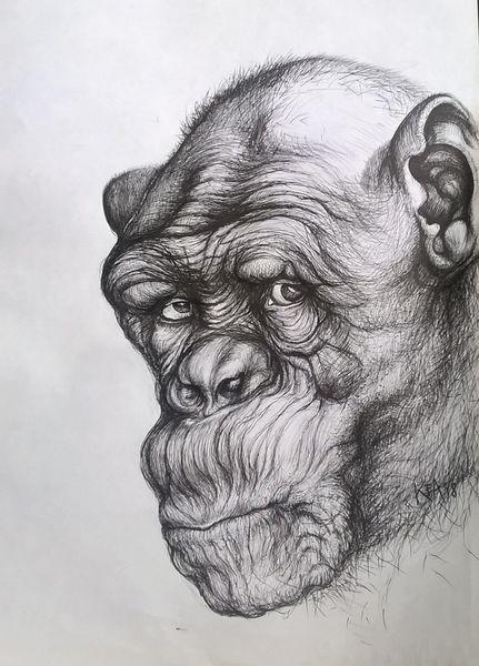 Augen, Schwarz weiß, Affe, Blick, Portrait, Zeichnungen
