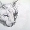 Katze, Falten, Augenblick, Zeichnungen