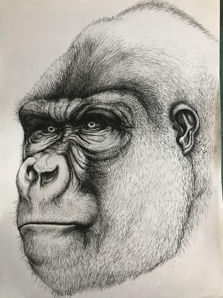 Blick, Selbstportrait, Gorilla, Bewustsein, Stärke, Zeichnungen