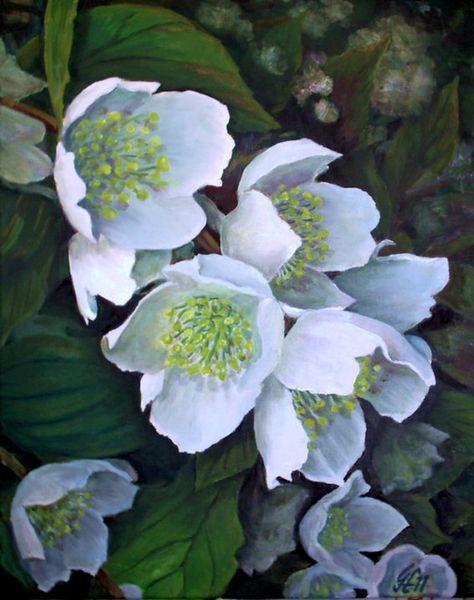 Blumen, Jasminblüten, Malerei