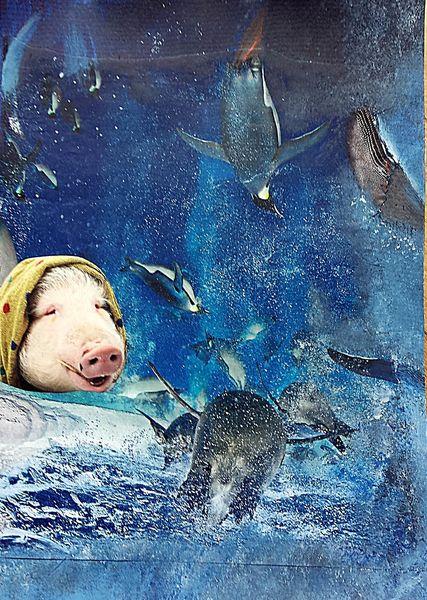 Ferkel, Blau, Delfin, Wasser, Robbe, Humor