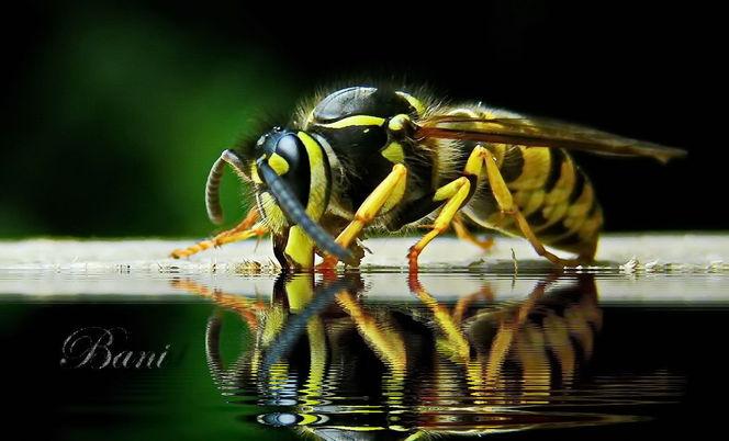 Insekten, Makro, Nahrung, Natur, Optik, Wasser