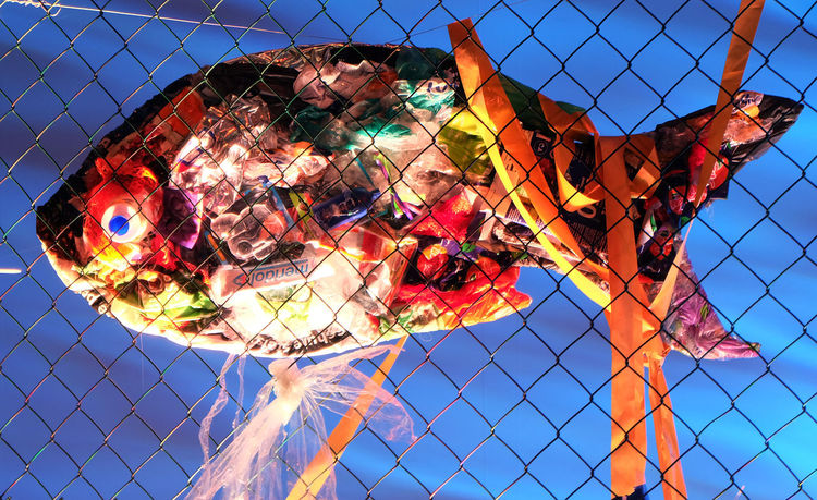 Müll, Fisch, Fotografie