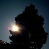 Sonne, Himmel, Baum, Fotografie