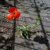 Straße, Sonne, Schatten, Blumen