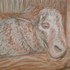Schaf, Stall, Kreide, Holz