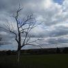 Baum, Tod, Waldsterben, Monument