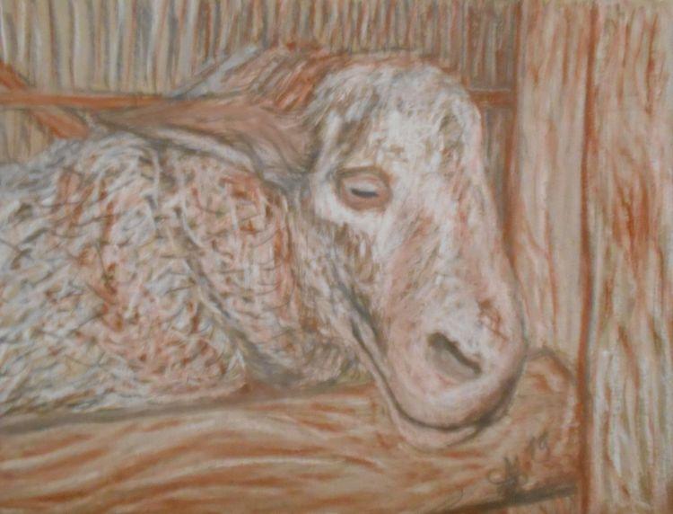 Stall, Schaf, Holz, Kreide, Kohlezeichnung, Wolle
