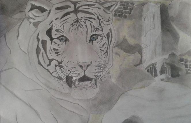 Zeichnungen, Start, Tiger